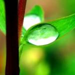 New Believer's Online Discipleship
