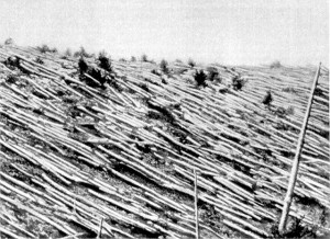 Trees knocked over after the Tunguska airburst event of 1908 released 10 to 15 megatons of TNT (1,000 Hiroshima sized atomic bombs)